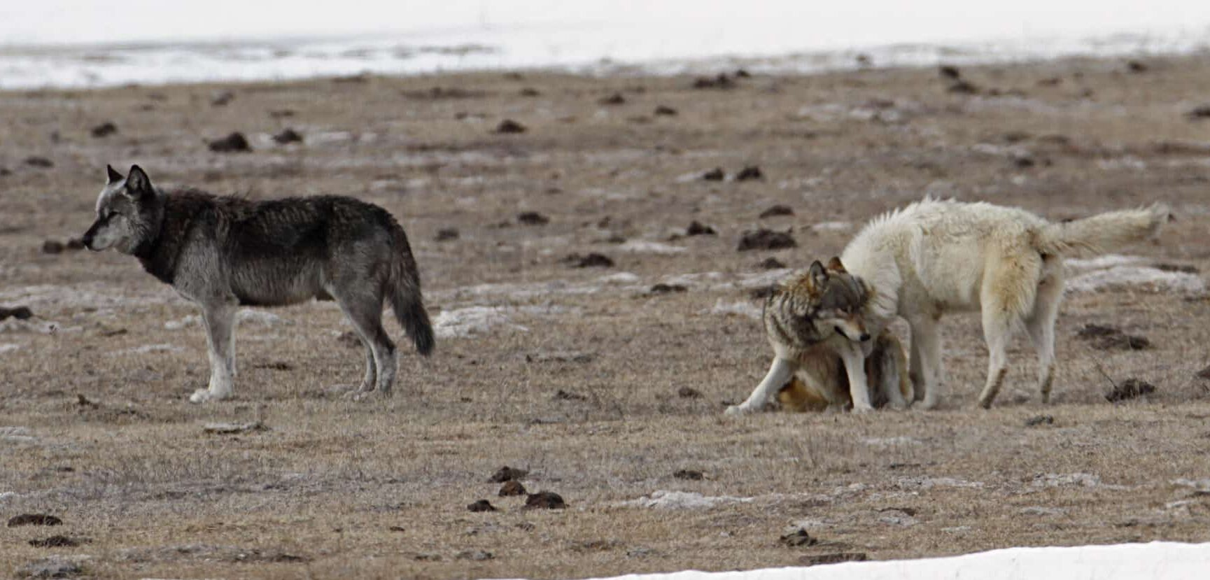 Public Domain: Yellowstone National Park